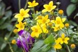 Flowers around the Garden