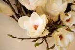 Detail Flower Shot